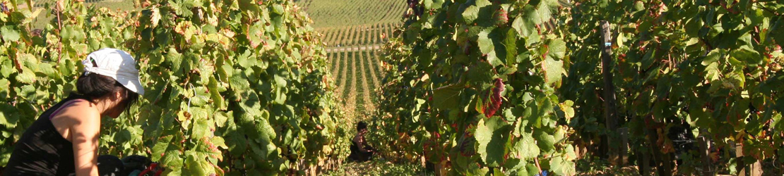 vins-de-france
